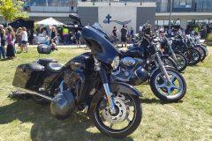 A Herd of Harleys